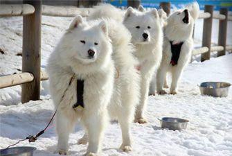 Baptême en chiens de traîneau sur la station de ski du Cambre d'Aze
