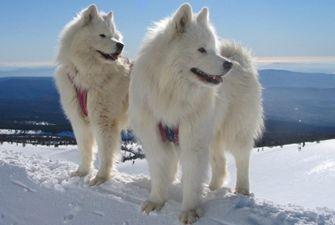 Excursions en chiens de traîneau sur la station de ski du Cambre d'Aze