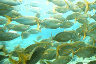 Baptême de plongée dans la réserve marine de Banyuls-sur-Mer