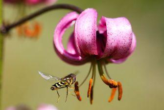 Randonnée journée dans la vallée fleurie - Eyne